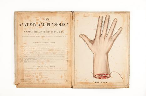 Gustave Joseph Witkowski France (1844–1923) Anatomie iconoclastique Pt. 9 A movable atlas showing the bones & muscles of the hand. The hand. Translated by James Cantlie. Bailliere, Tindall and Cox, London 1878–1888 book Special Collections Baillieu Library